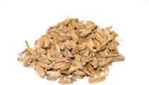 Koper włoski, fenkuł, nasiona
