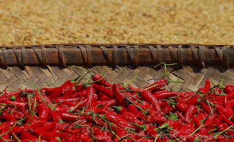 papryka chili suszona w chinach