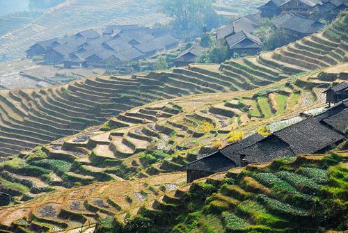 pole tarasy ryżowe