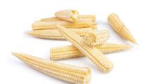 Młode kolby kukurydzy